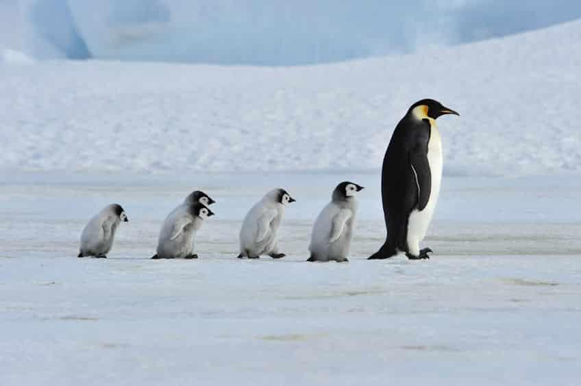 ペンギンの雑学まとめ