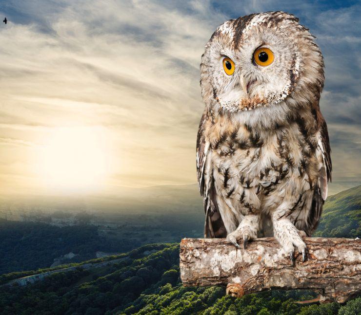 フクロウの首がすごく回ることに関する雑学