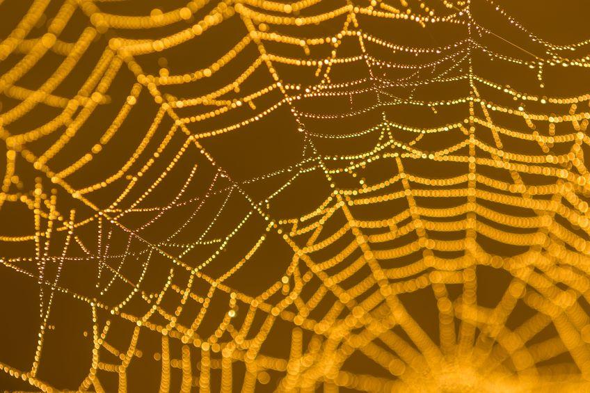 クモの糸の強度は鋼鉄の5倍についてのトリビア