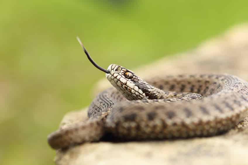 毒蛇に咬まれたときの対処法に関する雑学