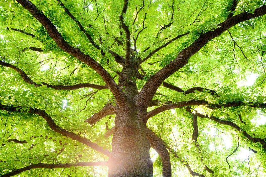 光合成には「緑色」が不可欠というトリビア