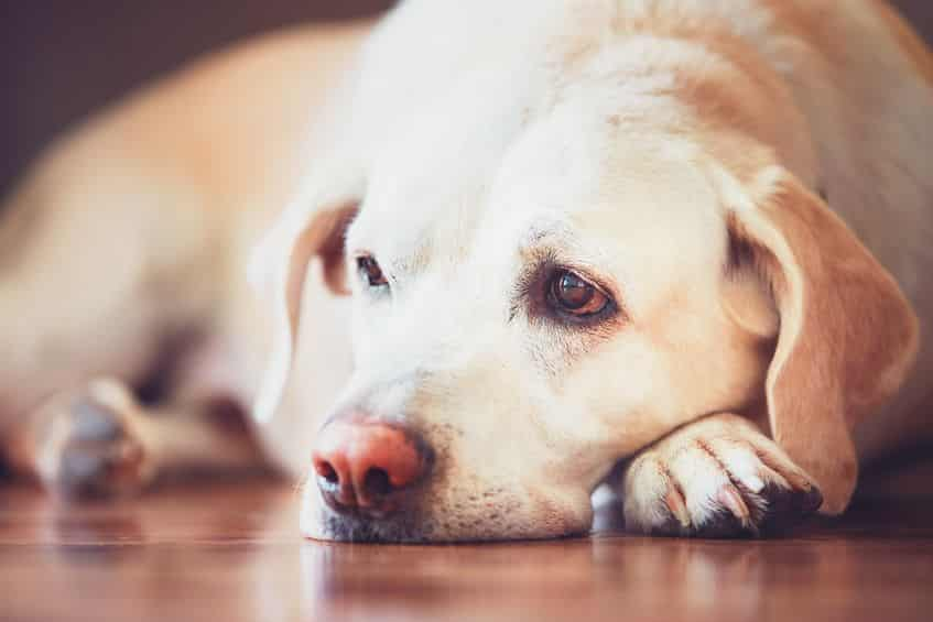 犬の目は青と黄色を認知することができるという雑学