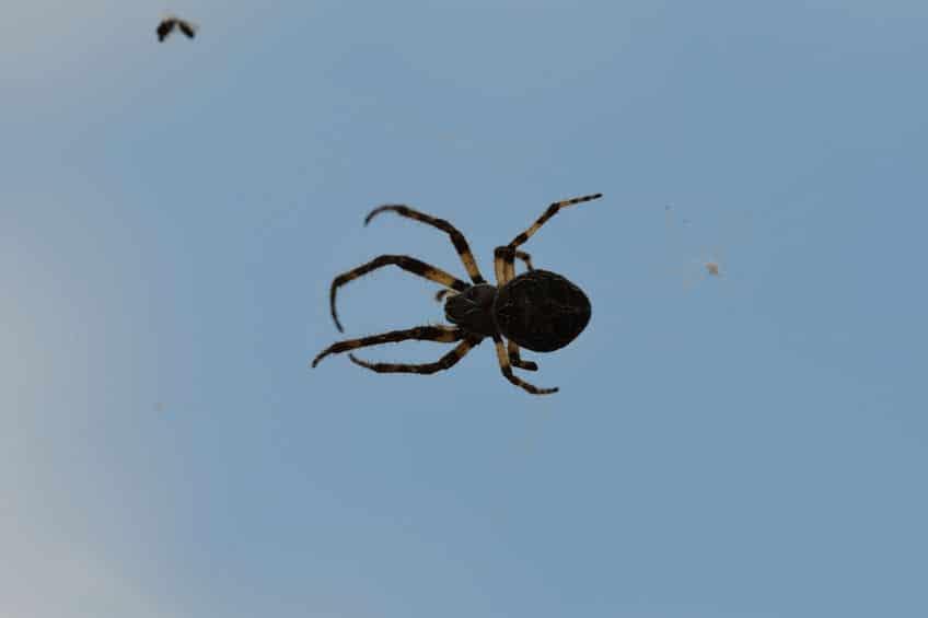 クモは風がなくても空を飛べるというトリビア