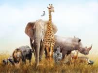 動物の違い・比較の雑学まとめ