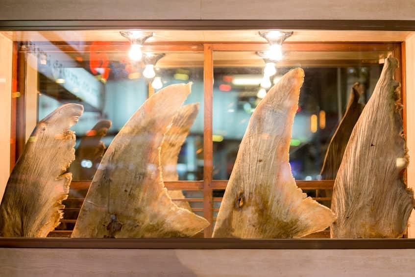 フカヒレをとったあとの鮫の憐れさに関する雑学