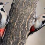 「キツツキ科」は存在するが、日本には「○○キツツキ」という鳥はいないという雑学