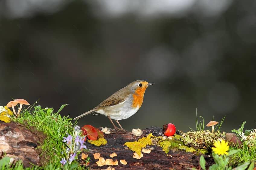 木の実がどれも派手なのは鳥にみつけてもらうためという雑学