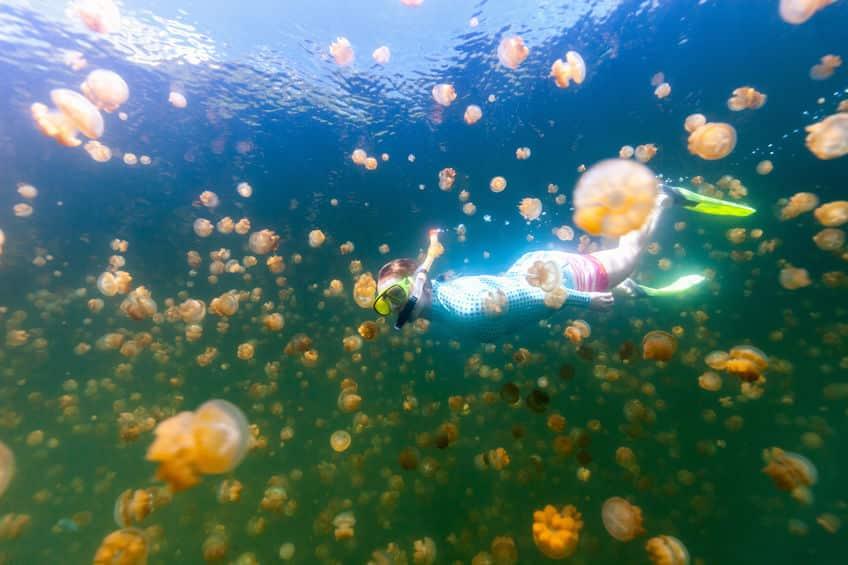 「ジェリーフィッシュレイク」では2種類のクラゲに会えるというトリビア