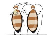 「ゴキブリ」の当初呼ばれていた呼び名に関する雑学