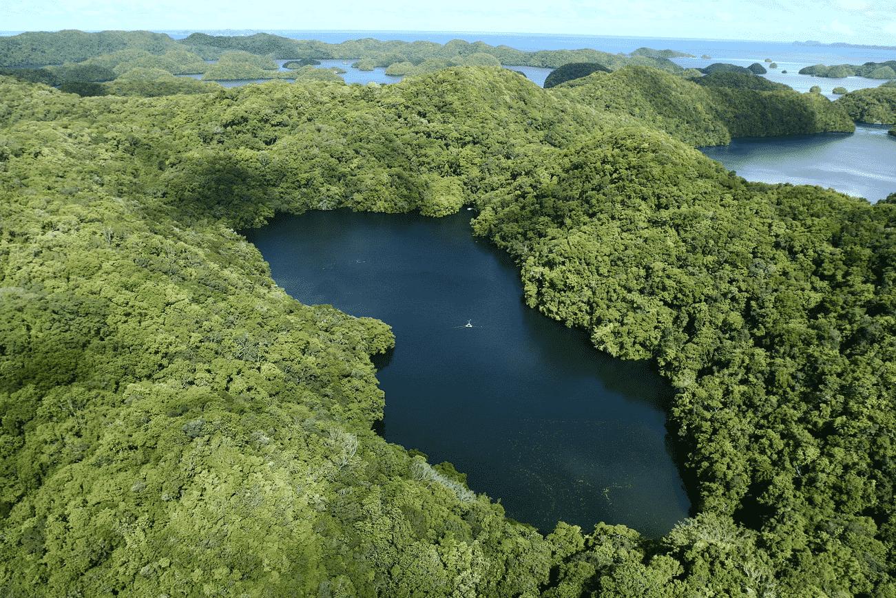 パラオにはクラゲばっかり生息している湖があるという雑学