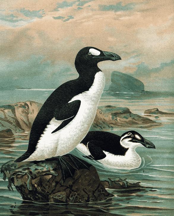 ペンギンとはもともと「オオウミガラス」という雑学