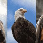 タカ、ワシ、トビの違いに関する雑学
