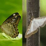 「チョウ」と「ガ」の違いに関する雑学