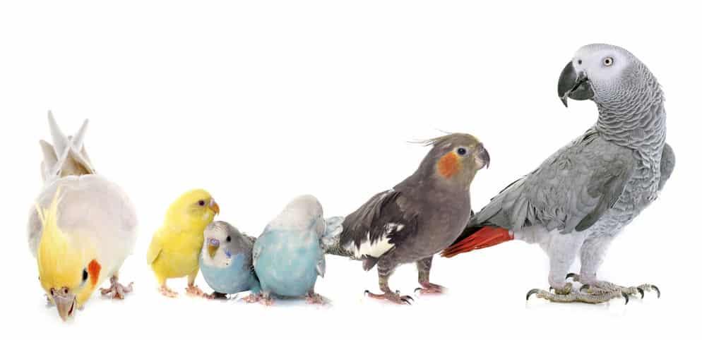 鳥類の雑学まとめ