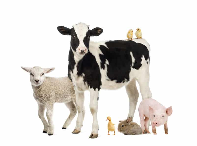 草食動物の雑学まとめ