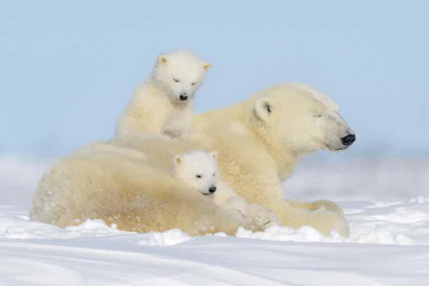 北極・南極の動物雑学まとめ