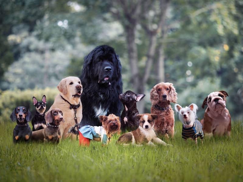 犬についての雑学まとめ
