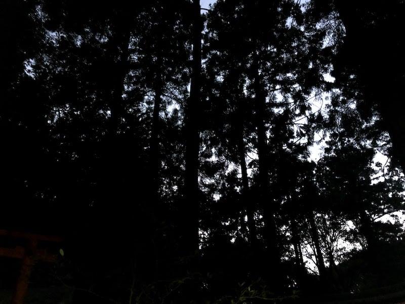 伏見稲荷大社の千本鳥居の森