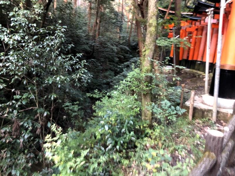 伏見稲荷大社の千本鳥居の谷