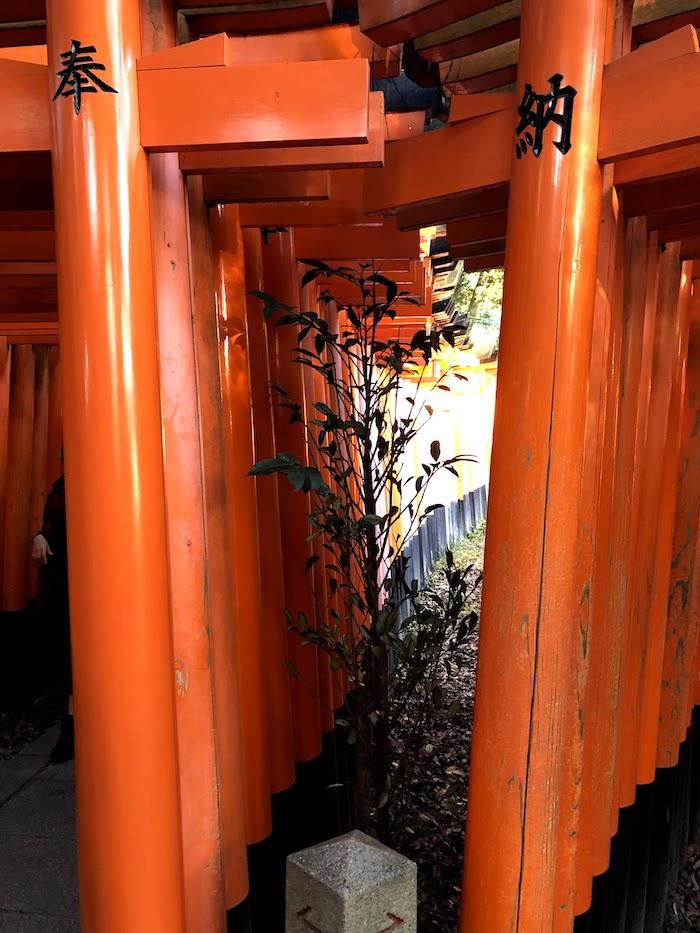 伏見稲荷大社の千本鳥居の分かれ道をアップで撮影