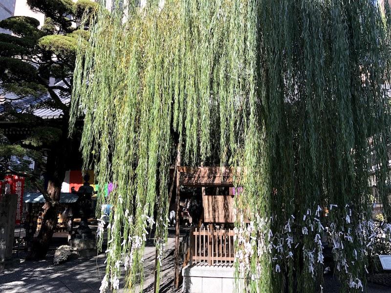 六角堂の柳の木