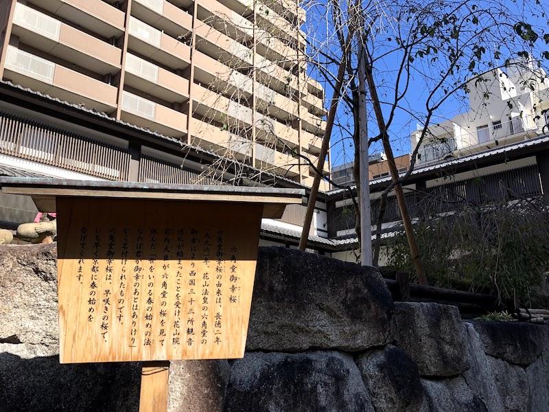 六角堂の桜