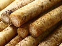 海外ではゴボウは食材で使用されることが少ないという雑学
