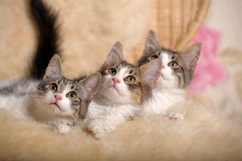 周波数スゴい…!人間とネコの聴力の違いはなに?というトリビアまとめ