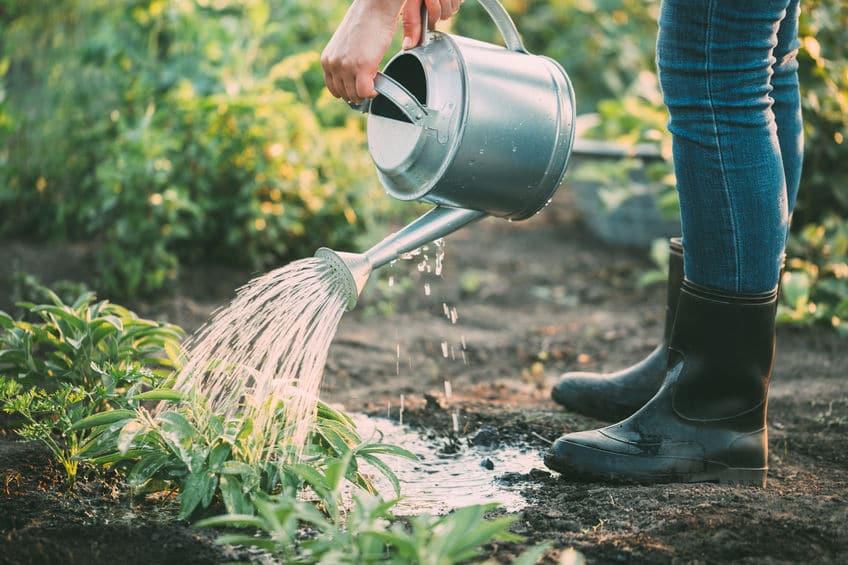"""害虫対策も!植物は""""におい""""でコミュニケーションをとっているという雑学まとめ"""
