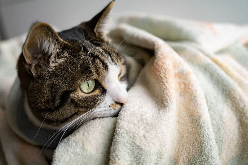 人間とネコの聴力の違いは?に関する雑学