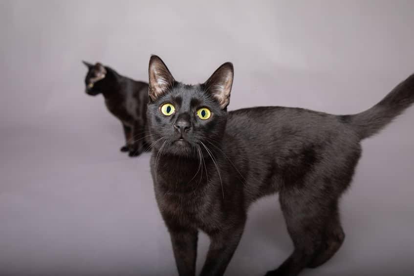 ネコの聴力は人間の6~10倍についてのトリビア
