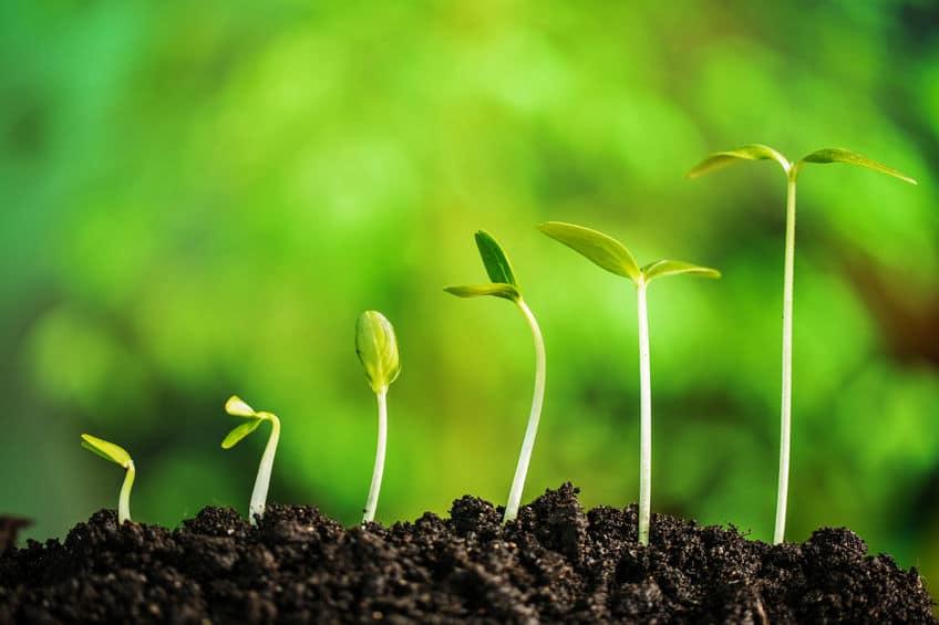 植物は「におい」でコミュニケーションをとっているという雑学