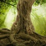 木の雑学まとめ