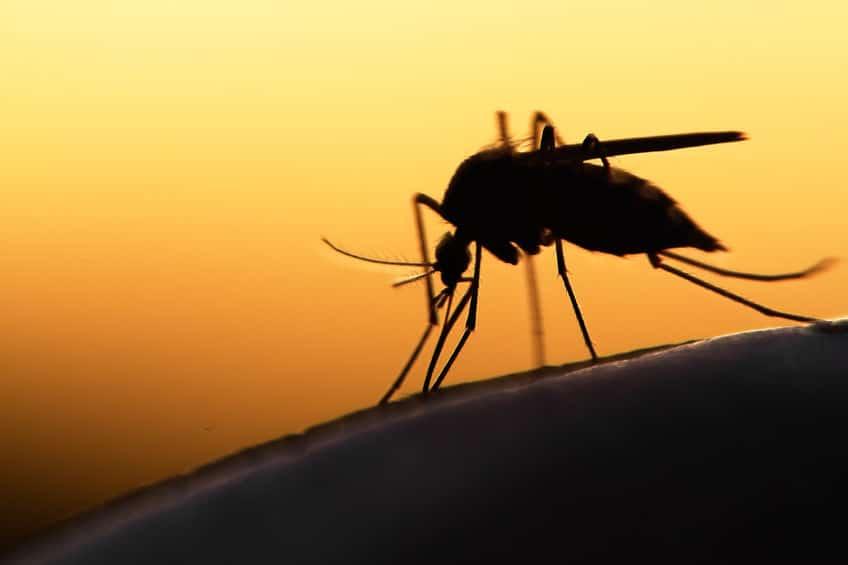 サメよりも人よりも…本当は怖い「蚊」についてのトリビア