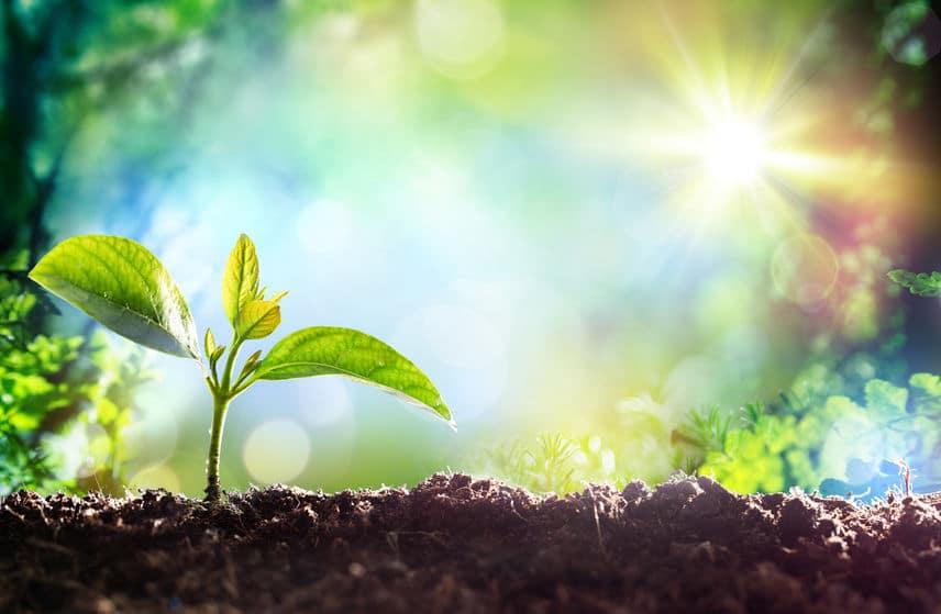 植物は周囲の仲間に「におい」で危険を知らせているというトリビア