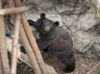 動物園のクマは冬眠しないという雑学