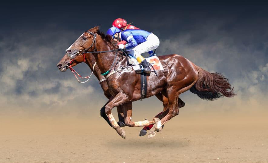 サラブレッドが軍馬になれない理由に関する雑学