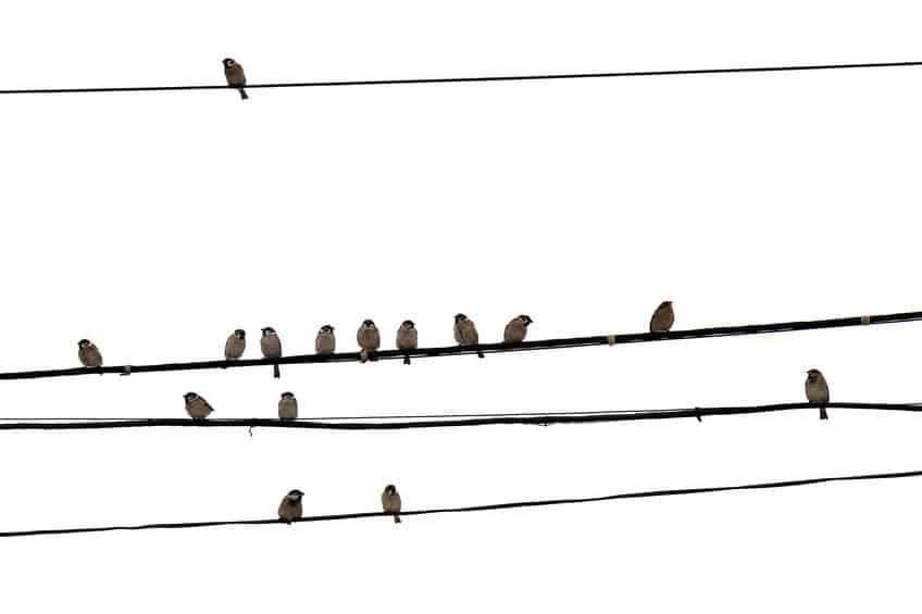 スズメやカラスが電線にとまっても感電しない理由とは?という雑学