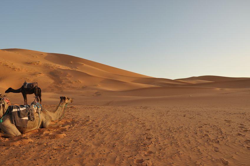 他の砂漠と区別する必要がないぐらい、絶対的な砂漠だったというトリビア