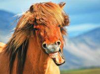 野次馬の語源と由来に関する雑学