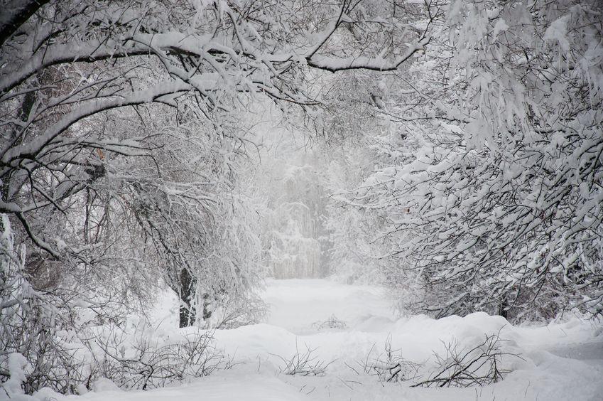 冬日は1日の最低気温で決まるというトリビア