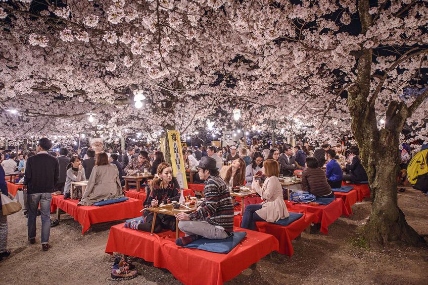 日本最大の花見をしたのは豊臣秀吉という雑学