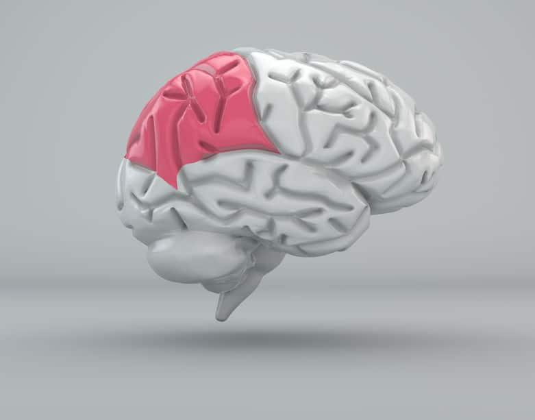 大きくはないが発達した前頭葉。漱石は頭の回転が速かった?というトリビア