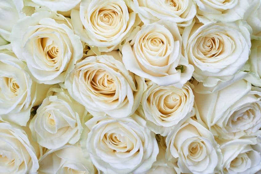 お父さんへの想い…アメリカでは父の日にバラを贈るという雑学まとめ