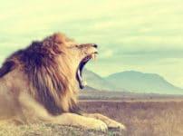 ライオンのたてがみがオスだけに生える理由に関する雑学