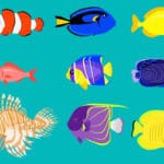 魚はどうやって寝てる?という雑学