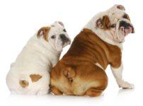 イギリスの郵便局員は、犬と目を合わせてはならないという雑学