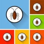ゴキブリが飛ぶのはどんなとき?という雑学