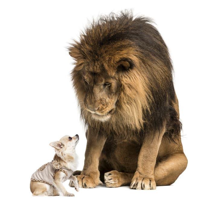 中国でライオンとして展示された犬がいるという雑学