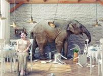 ゾウの耳が大きい理由に関する雑学